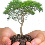 stock-photo-tree-in-hands-85261489